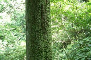 高尾山2005年8月