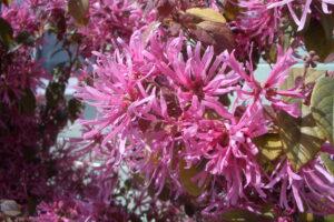 埼玉の自然-花