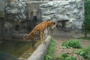 北海道旅行2007年-4日目(旭山動物園)