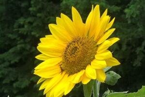 八ヶ岳-夏秋の花