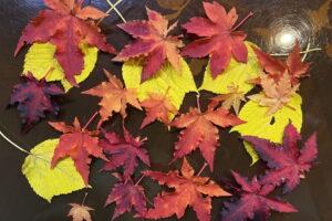 八ヶ岳-秋の景色