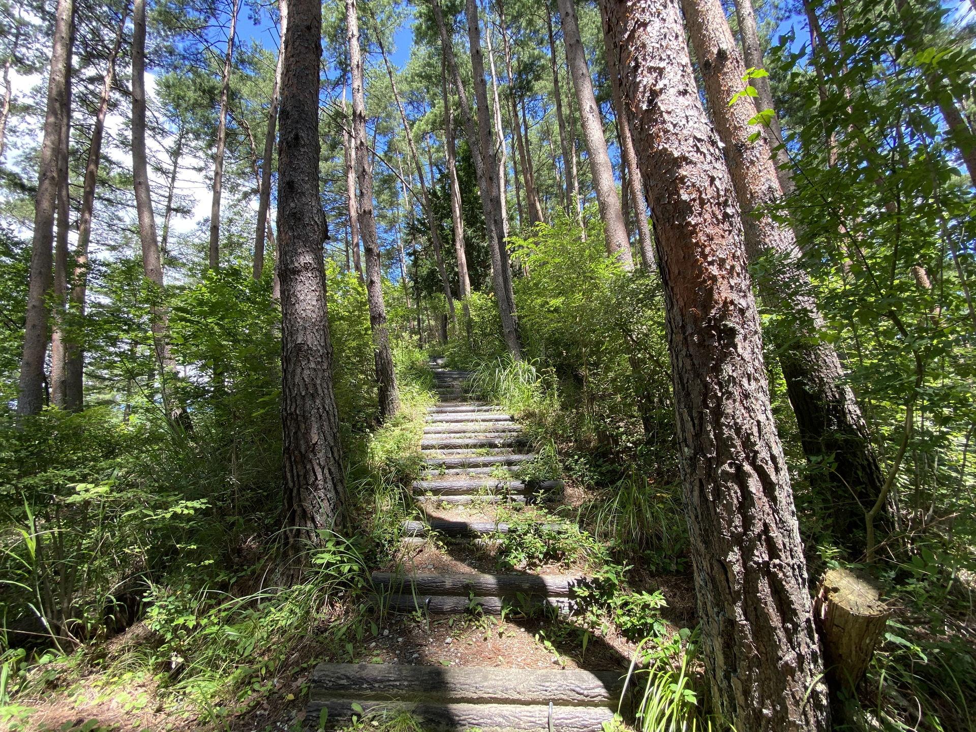 八ヶ岳周辺のお散歩